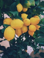 Post 9 Image - Lemon.jpg